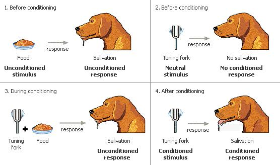 Classical Conditioning The Most Basic Type of Associative Learning