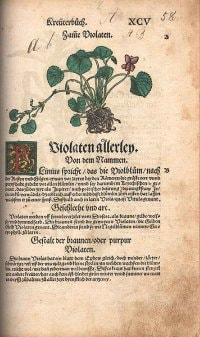 Contrafayt Kreuterbuch