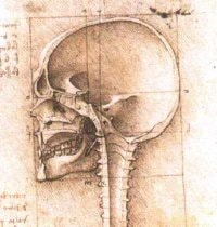 Da Vinci View of a Skull