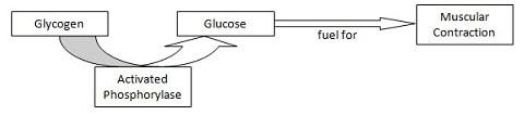 Nobel Price Medicine 1992